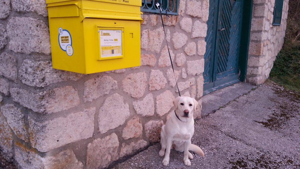 Mein guter Hund Ylvi